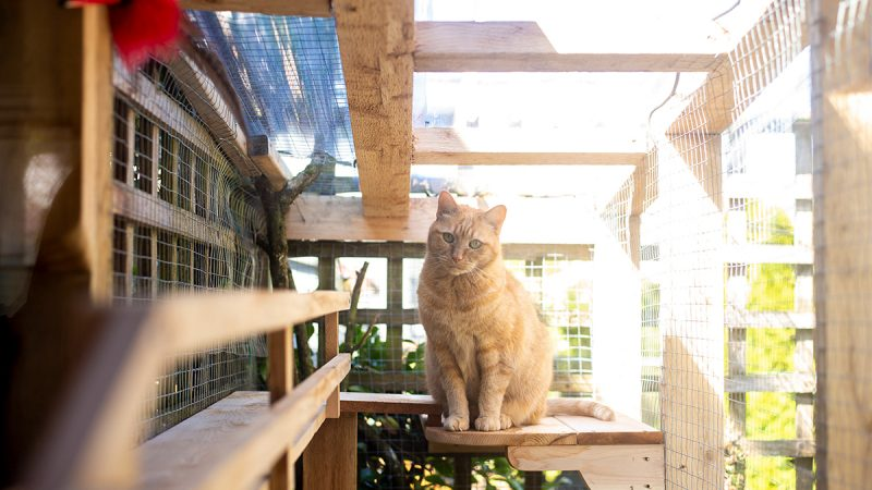 Vancouver catio tour will be the cat's meow!