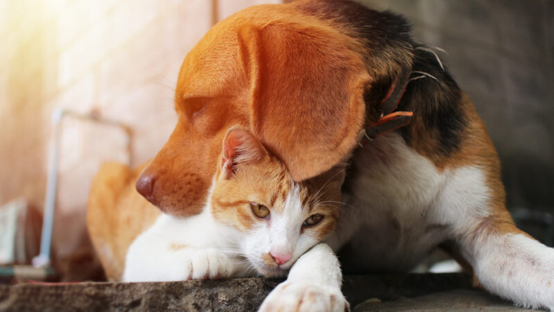 Can you care for a pet and be environmentally sustainable?