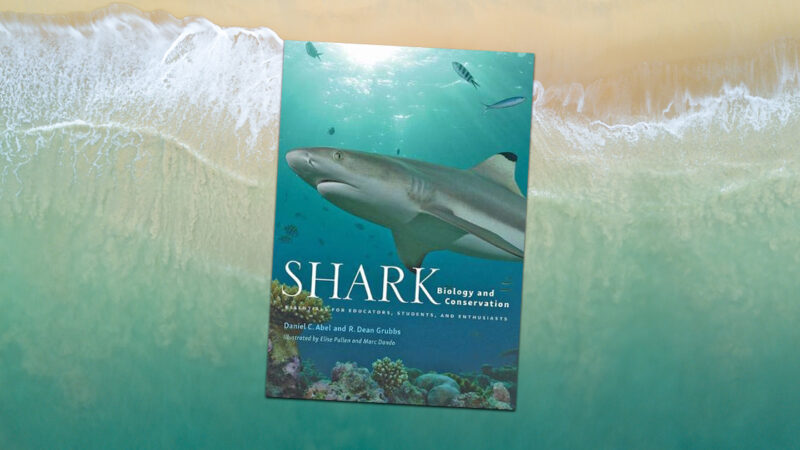 Dip your toes into this book and celebrate shark diversity